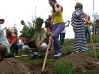 Planting of trees by the participants of the forum in the Festival Park, 5 July, 2008, Koprivstitsa