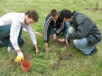 Participants of the Festival in action of planting trees